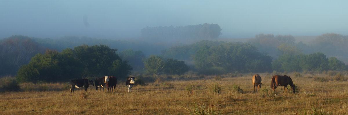landscape fog dawn Estancia San Eugenio Uruguay
